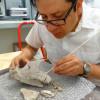 Encuentran mamut y otros restos fósiles de Edad del Hielo en San Luis Potosí