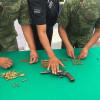Arranca el programa anual de canje de armas