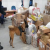 Decomisan drogas en el Aeropuerto de Toluca