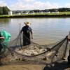 Edomex se consolida como primera entidad productora de pescado, sin mar