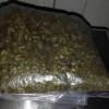 Marihuana y tráileres robados localizan en cateo realizado en Tecámac
