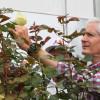Seguirá Edomex como líder nacional en la producción de flores