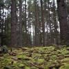Solicita Morena otorgar atribuciones a ayuntamientos en materia forestal