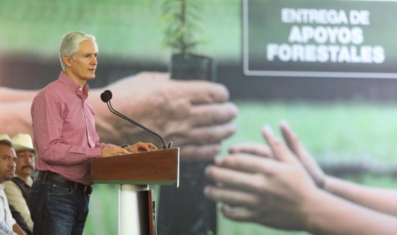 Invertirán 82 millones de pesos para preservar 55 hectáreas de bosques