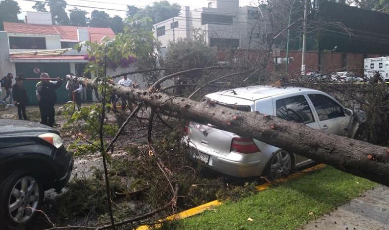 Por lo menos ocho árboles derrumbó la lluvia y granizada este viernes