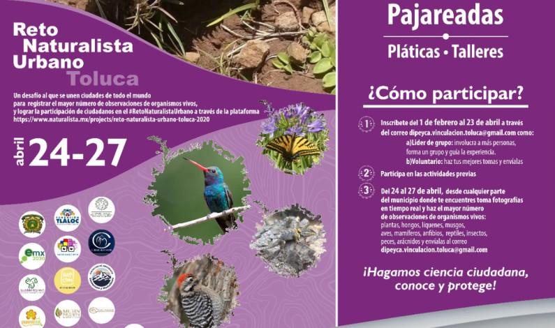 Participa Toluca en el Reto NaturaLista Urbano 2020