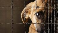 Prisión a quien maltrate animales