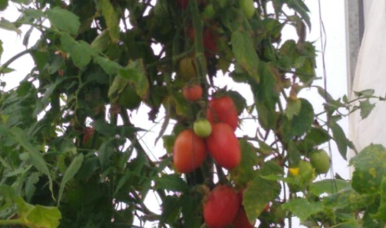 Combaten pobreza alimentaria con huertos